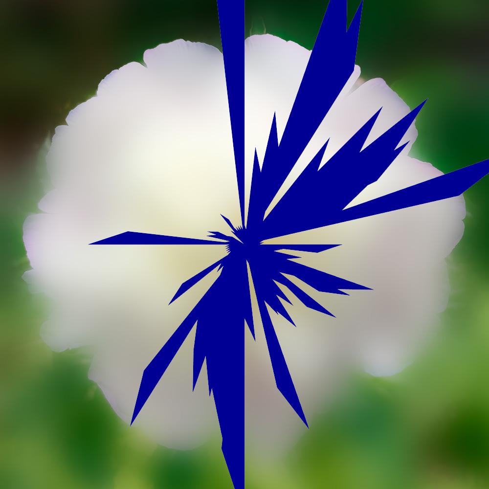 Narra Etoile-insecte-fleur Flux sans rythme Claude-CLd