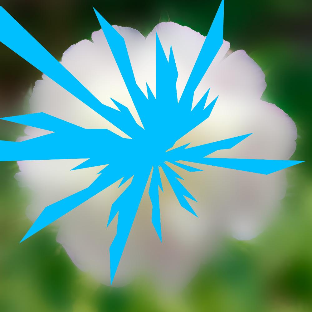 Narra Etoile-insecte-fleur La Fiancée Delse