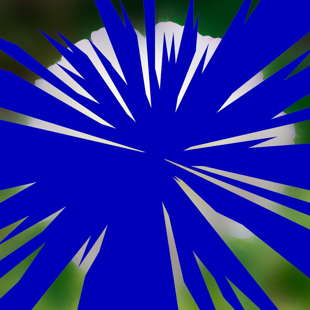 Narra-etoile-insecte-fleur Lettre d'une inconnue Zweig